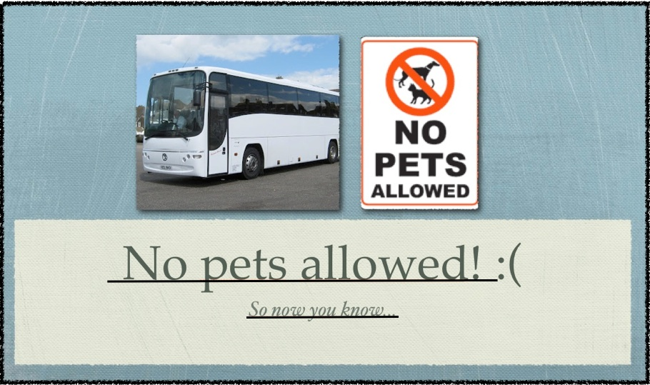 Can we take dogs or cats on a coach? We get this a lot    - Blog