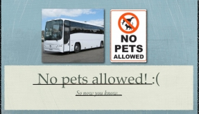 Can we take dogs or cats on a coach? We get this a lot...